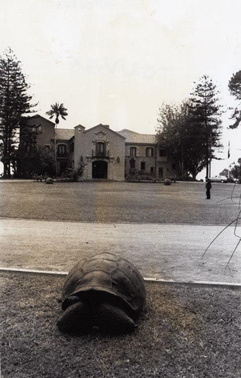 Thumb tortuga en palacio presidencial cerro castillo anselmo cordova
